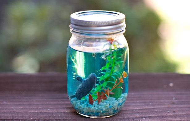 2-mason-jar-aquarium