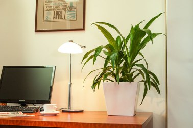 Plant in Workspace